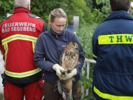 owl saved