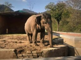 Kaavan the elephant is being freed