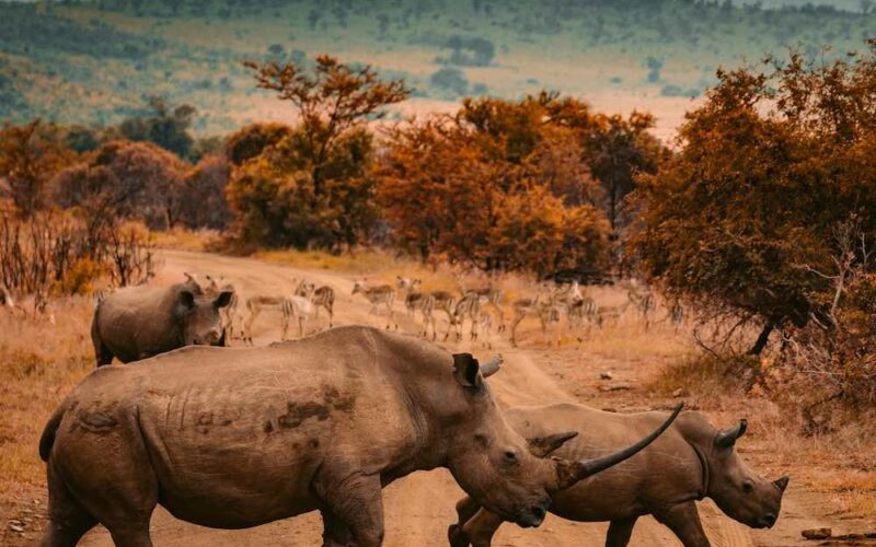 Rhino poaching in South Africa drops by 53%