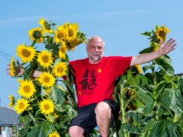 gardener grows sunflower with 27 heads