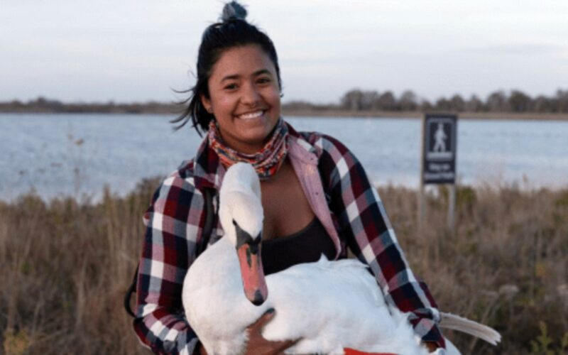 Birder sees Sickly Swan and Saves its Life