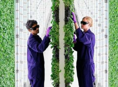 This 2-Acre Vertical Farm Offers more than 720 Acres 'Flat Farms'