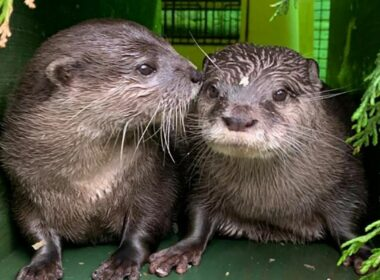 2 lonely otters