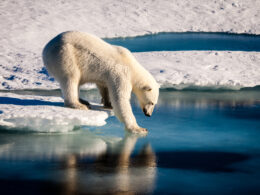 In 'Huge Victory for Polar Bears', Court Rejects Arctic Offshore Drilling Project