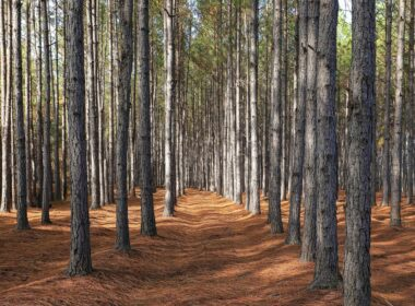 IKEA Purchases 11,000 Acres of U.S. Forest to Protect from Being Developed