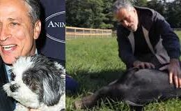 12-Acre Sanctuary Opened By Jon Stewart and His Wife for Abused Animals