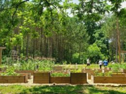 Biggest free food forest