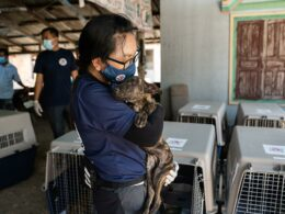 Cambodian dog meat slaughterhouse
