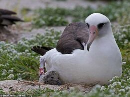 Oldest Known Wild Bird in the World Gives Birth at 70 Years