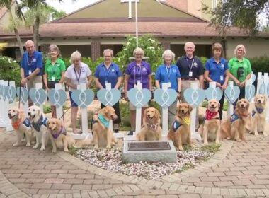 Dogs for Comfort Arrive in South Florida from Different states to Assist Surfside Rescue Workers