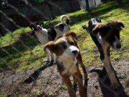 Street Dogs have found Shelter & Vocations after the Mexican Army Rescues Them